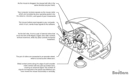 내게맞는 마우스를 위한 마우스 기초상식의 모든것 Page 2 :: 보드나라