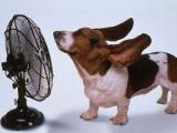 찜통 더위 시작,여름 폭염 대비 선풍기 초이스 꿀팁